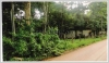 Land with teak wood trees near Sivilay Market for sale