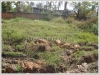 ID: 829 - Vacant land near Mekong Breeze Hotel