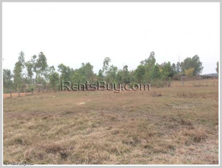 ID: 3959 - Rice field Land for sale in Ban Nasiew, Nxaythong district