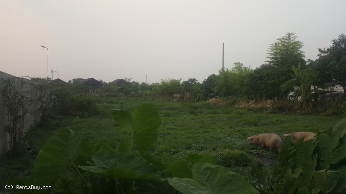 ID: 4138 - Vacant land for sale in Ban Donnokkoum by concrete road