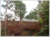 ID: 2450 - Rubber Tree Plantation on 17.5 hectares in Pakngum District